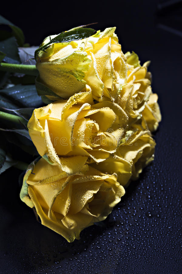 En bukett av gula rosor med små droppar på en mörk bakgrund royaltyfri fotografi