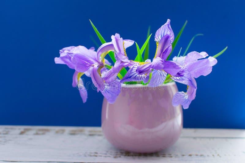 En bukett av iriers i en liten lila kopp på en blå bakgrund royaltyfri foto