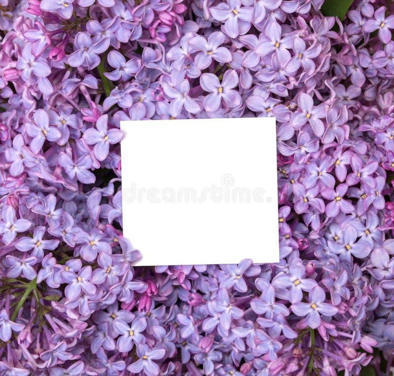 En bukett av lilan och en anmärkning inom Mjuk bakgrund fotografering för bildbyråer