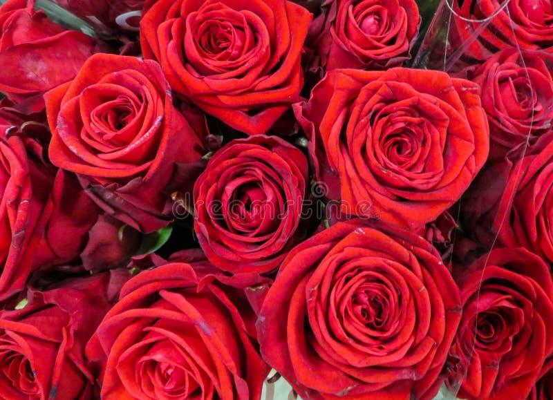 En bukett av nya härliga röda rosor i en vas fotografering för bildbyråer