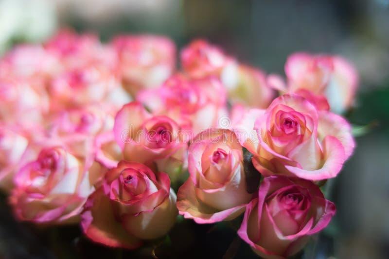En bukett av rosor i en trevlig färg royaltyfria bilder
