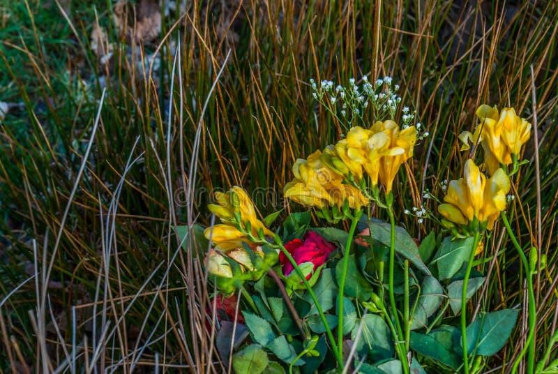 En bukett av rosor som förläggas på en höstack royaltyfria bilder