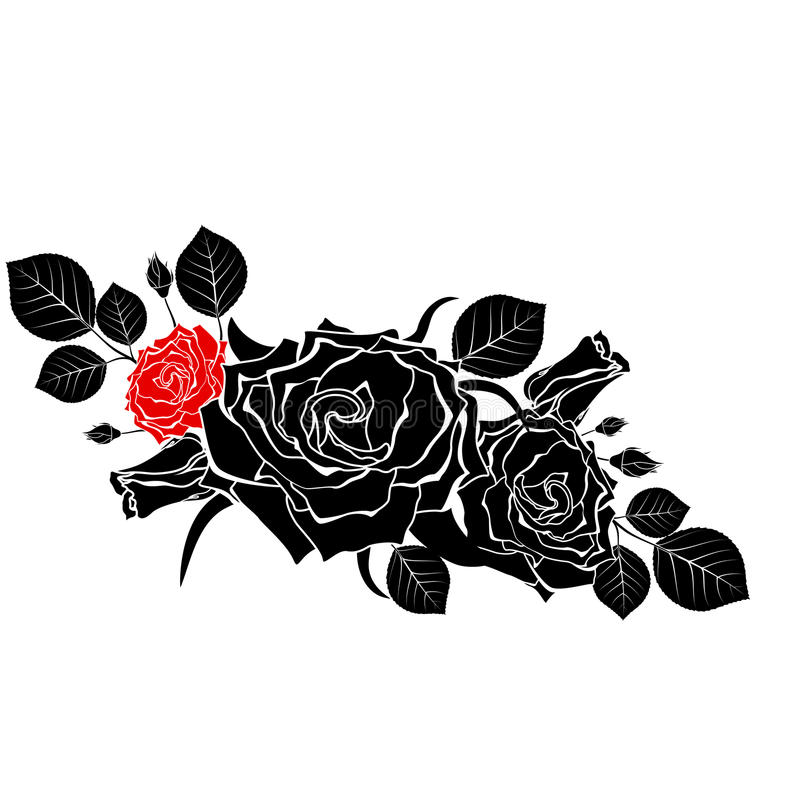 En bukett av svarta rosor med en som är röd på en vit bakgrund Vect arkivfoton