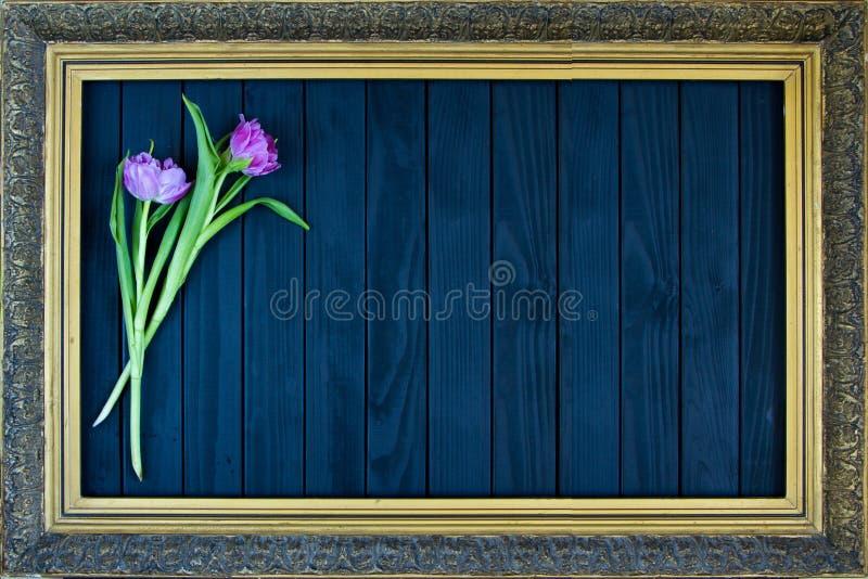 En bukett av tulpan i en ram f?r m?lningar p? en svart bakgrund royaltyfria bilder