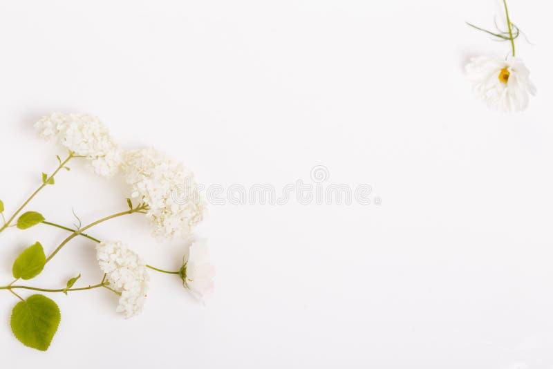 En bukett av vita blommor på vita bräden arkivbilder