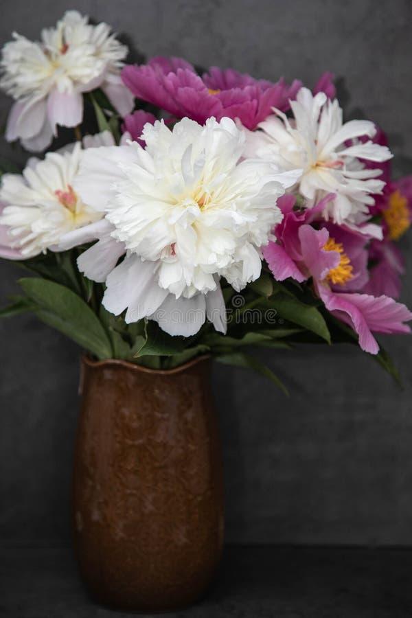 En bukett av vita och rosa karmosinröda pioner i en brun vas på en grå bakgrund Blommor p? m?rk bakgrund arkivbild