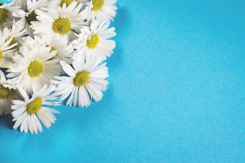 En bukett av vita tusenskönor arkivfoto