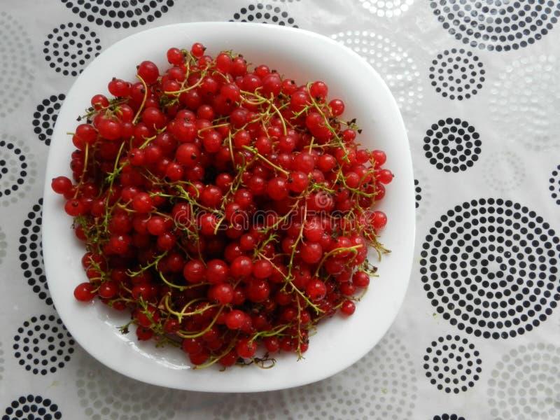 En bunke av röda vinbär royaltyfri bild