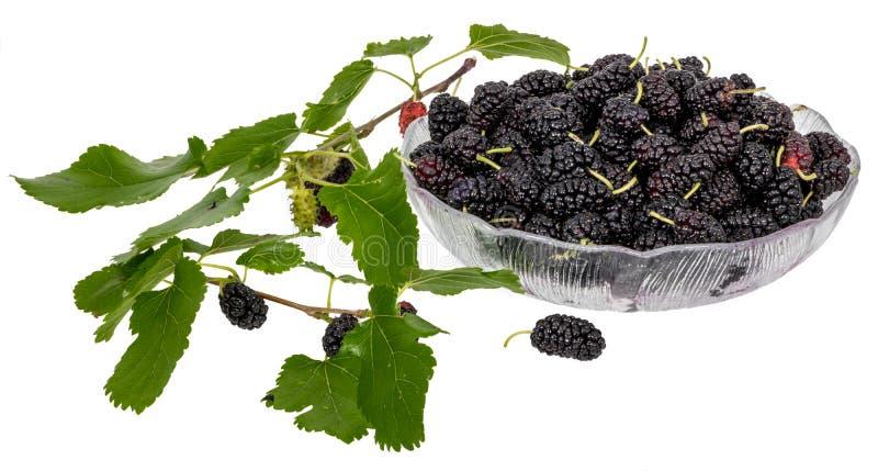 En bunke mycket av svarta mullbärsträd som dekoreras med mullbärsträdsidor och omogna frukter fotografering för bildbyråer