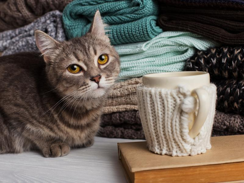 En bunt av stucken kläder av olika färger och texturer, på tabellen bredvid en kopp i ett fall, en bok och en katt kopiera avstån royaltyfria foton