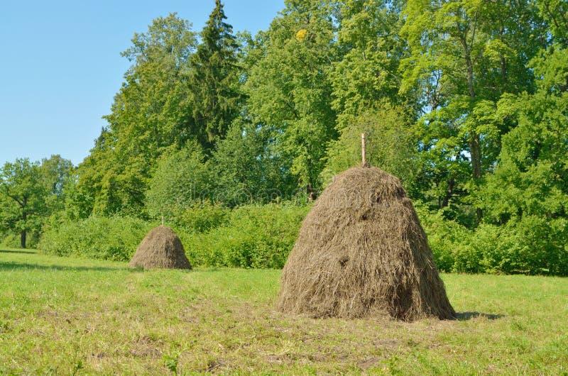 En bunt av torrt hö i fältet royaltyfri bild
