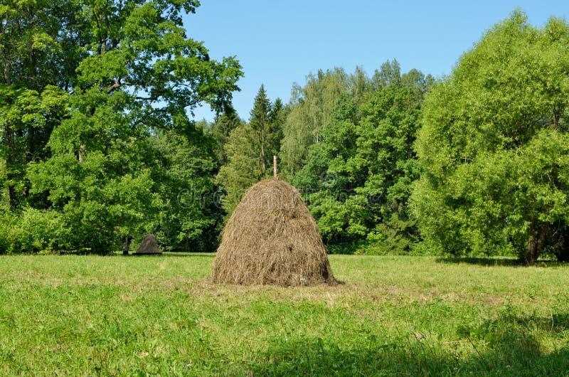 En bunt av torrt hö i fältet arkivfoto