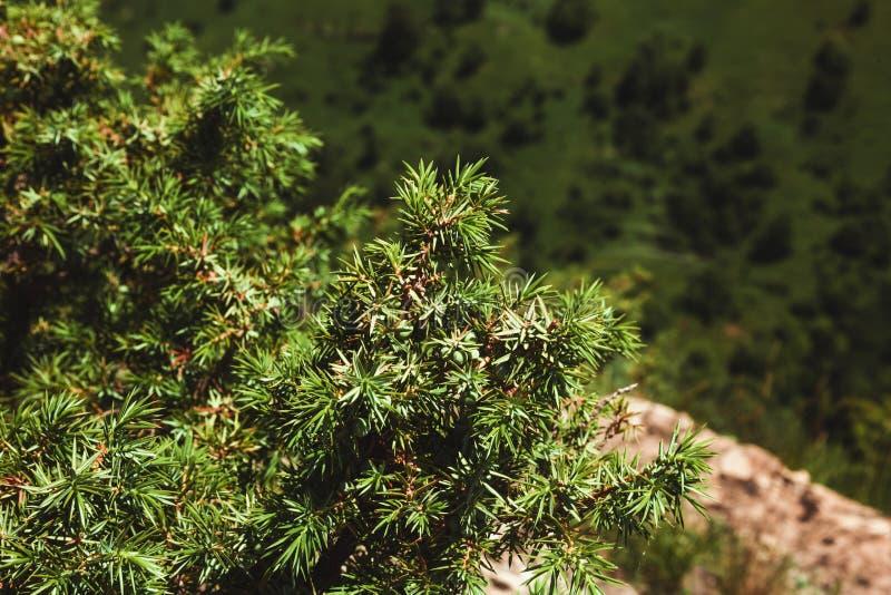 En buske av den gröna en växer i bergen tätt upp fotografering för bildbyråer