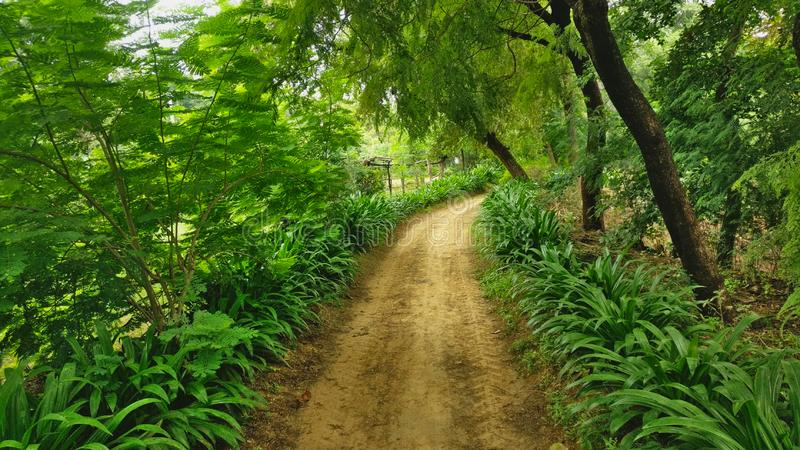 En byväg i Alwar, Rajasthan, Indien arkivfoto