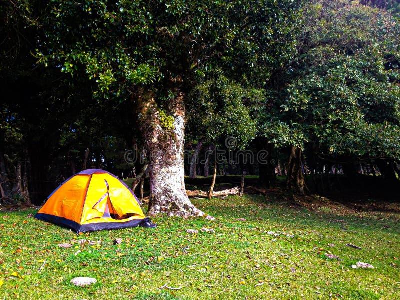 En campa dag ut på Forresten royaltyfri bild