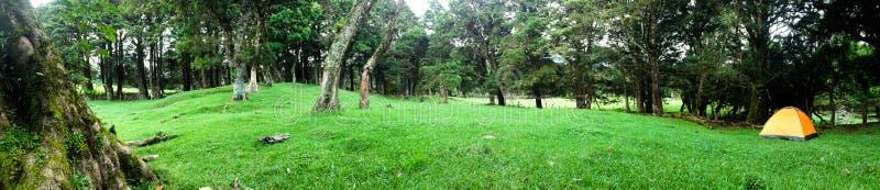 En campa dag ut på Forresten royaltyfri fotografi