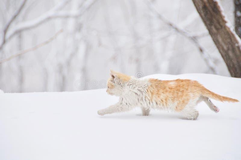 En Cat Running i snön royaltyfria bilder