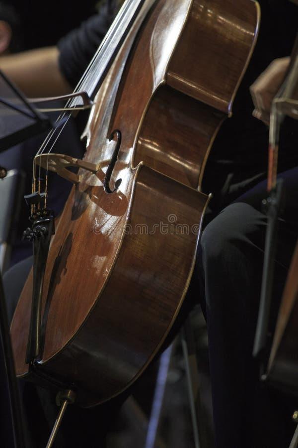 En cellist i konsert royaltyfri fotografi