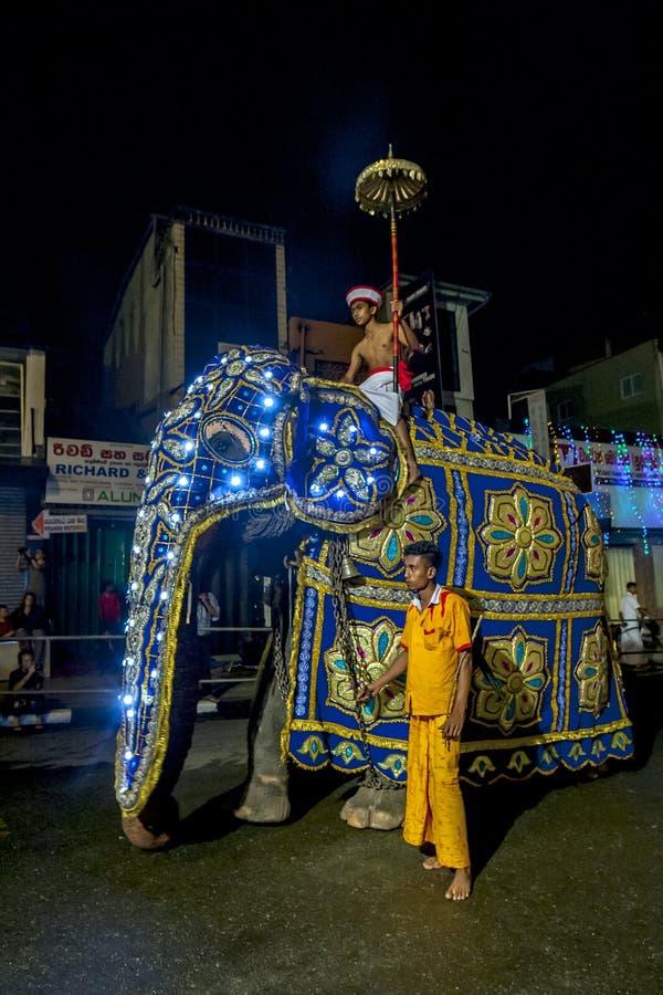 En ceremoniell elefant i Kandy royaltyfri bild
