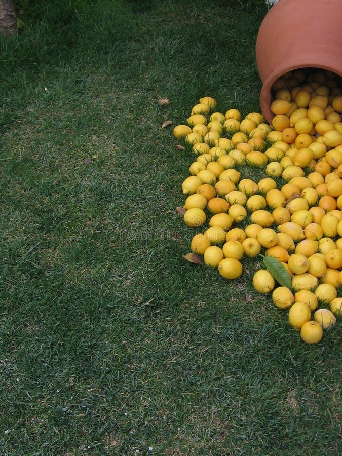 En Clay Pot av citroner som spills på jordningen royaltyfri foto