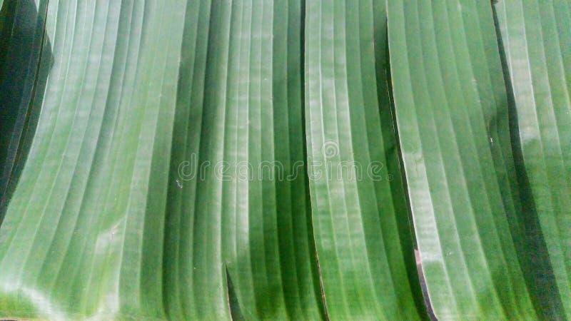 En closeup av en bananpalmblad royaltyfri fotografi