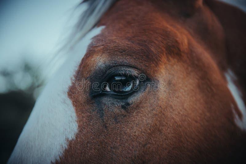 En closeup av ett hästöga arkivbilder