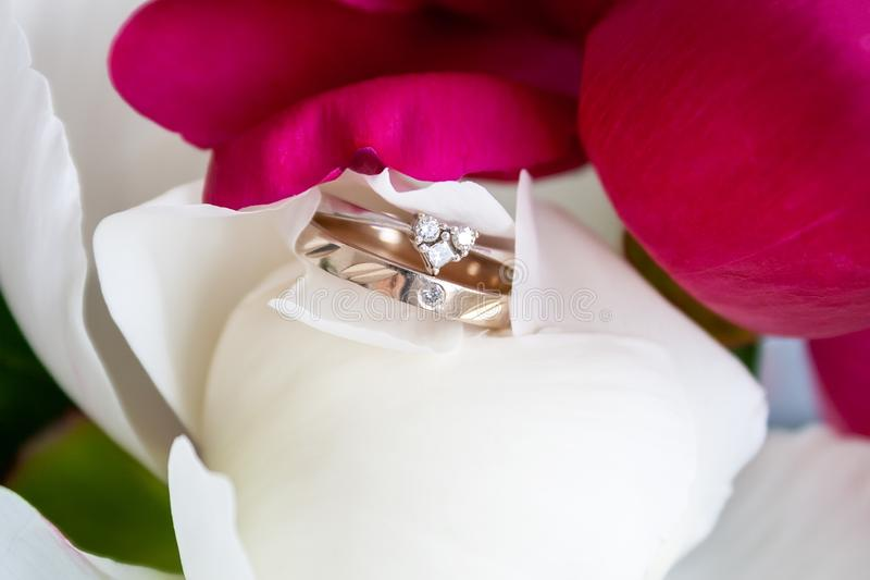 En closeupsikt av två härliga vita guld- cirklar: koppling och bröllop, som ligger bland kronbladen av den vita pionknoppen arkivbild