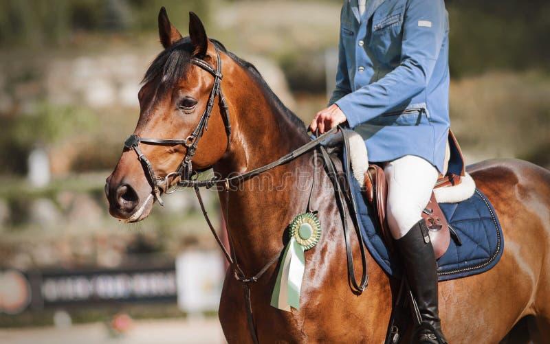 En competiciones deportivas ecuestres, un caballo de la bahía recibió una rosette verde como recompensa fotos de archivo libres de regalías
