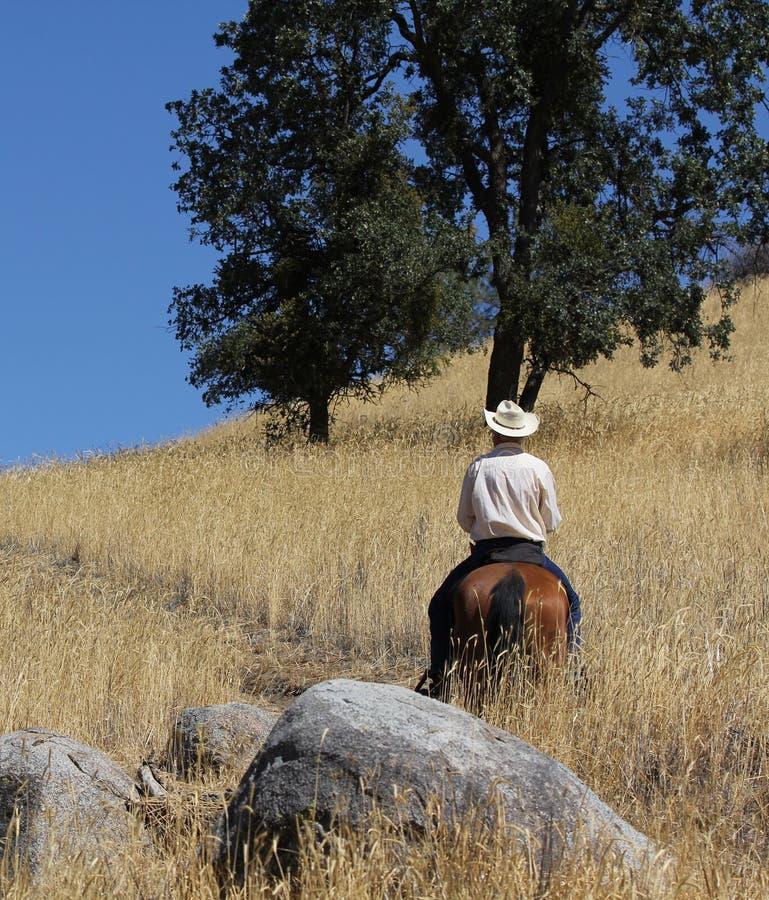 En cowboyridning i ett fält med träd up en bergslinga royaltyfria foton