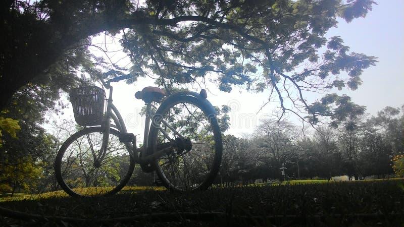 En cykel i parkera arkivfoton