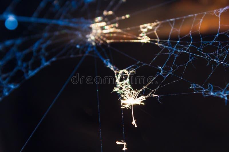 En début de soirée des gouttes de rosée sur un Web ont été allumées par le Web léger iridescent d'arc-en-ciel photo libre de droits