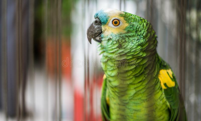 En dag i papegojalivet! arkivfoton