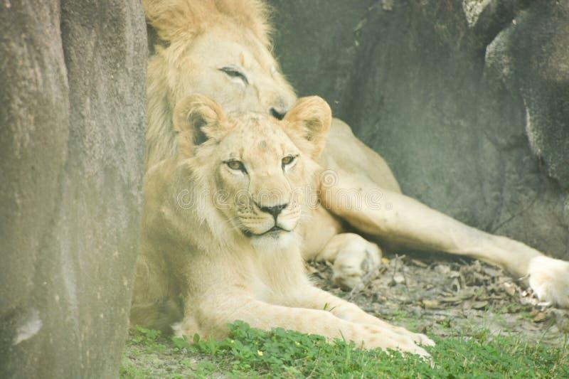 En dag på zooen royaltyfri bild
