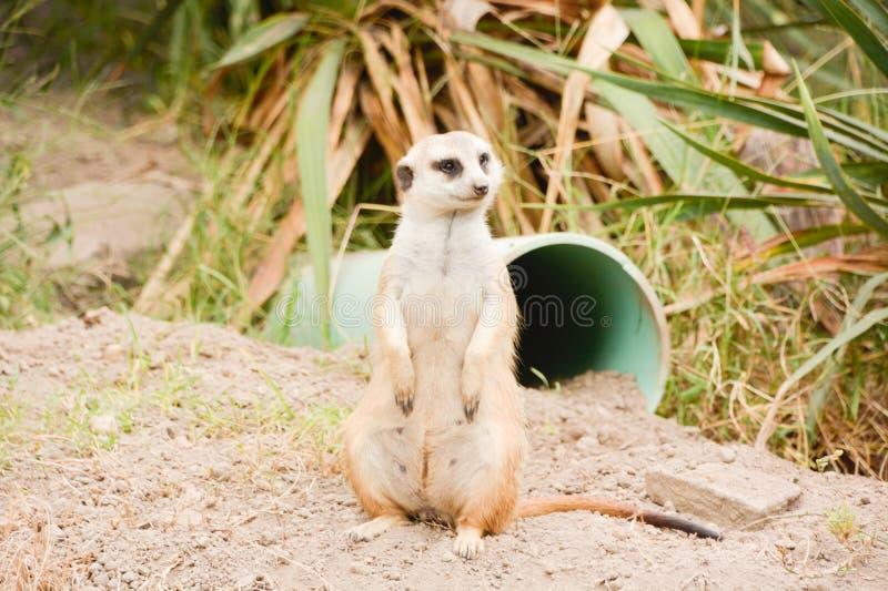 En dag på zooen fotografering för bildbyråer