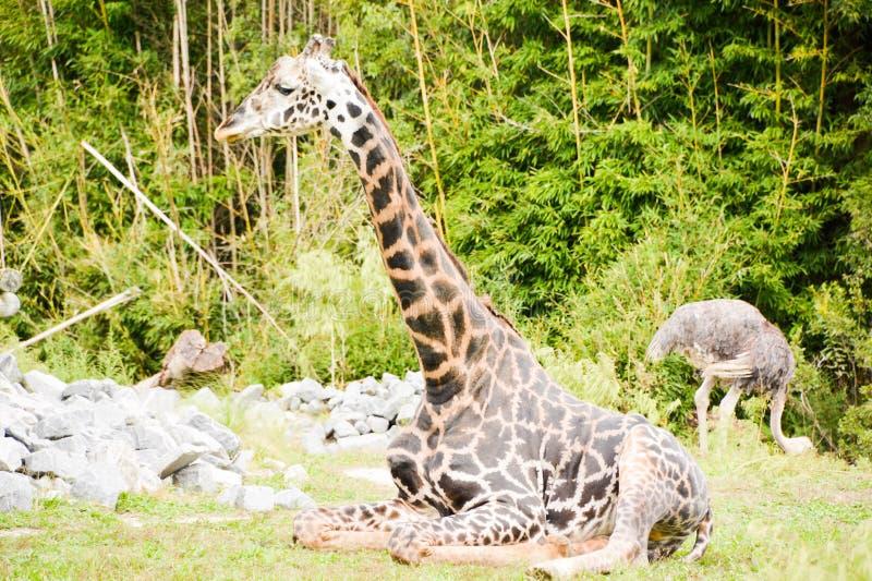 En dag på zooen royaltyfri fotografi