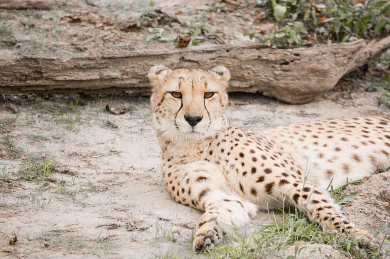 En dag på zooen arkivfoton