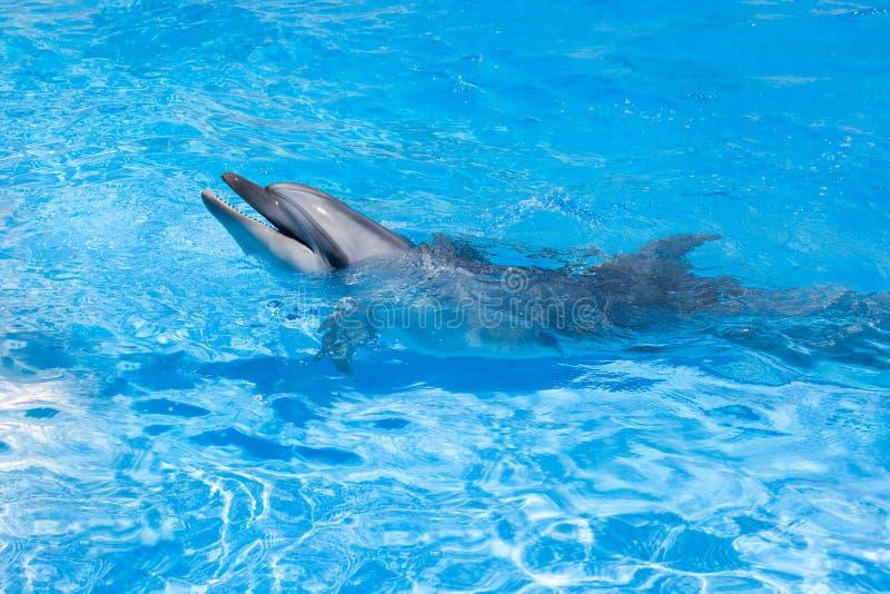 En delfin som ser ut ur slutet för blått vatten upp royaltyfria bilder