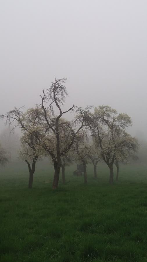 En dimmig sommardag fotografering för bildbyråer