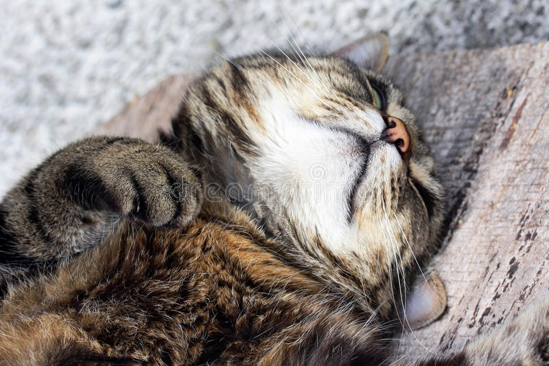 En djup sova katt fotografering för bildbyråer