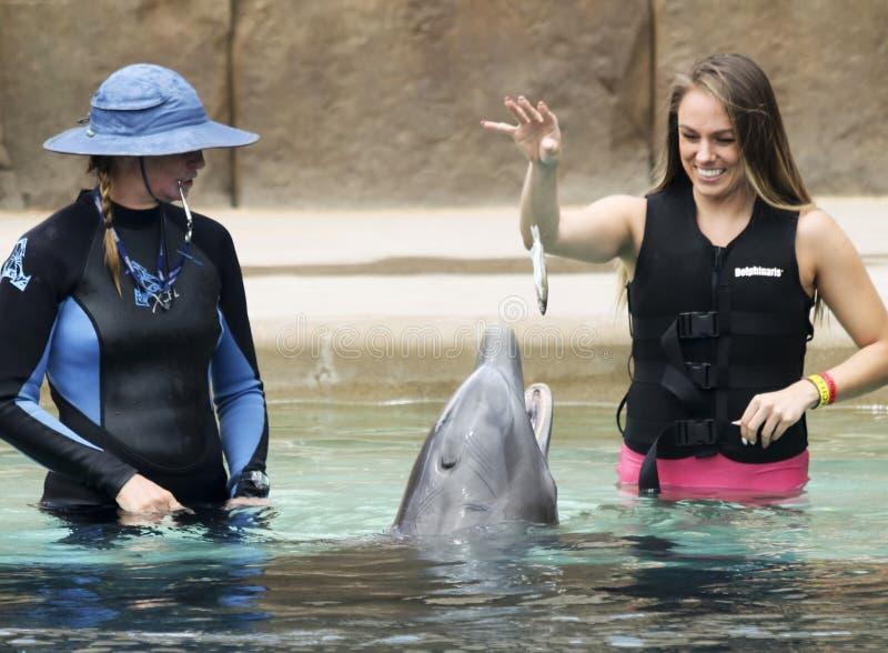 En Dolphinaris besökare matar en delfin en fisk fotografering för bildbyråer