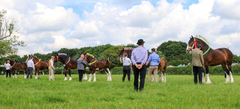 En domare som bedömer hästar på en show royaltyfri foto