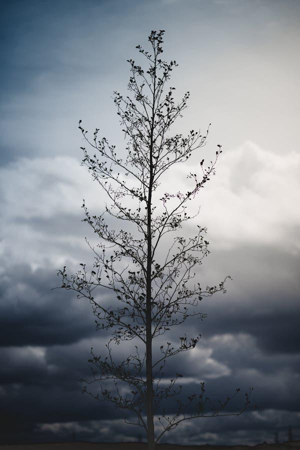 En dramatisk bild av ett högväxt träd som sitter mot lynniga himlar i bakgrunden med blåa och gula signaler arkivfoto