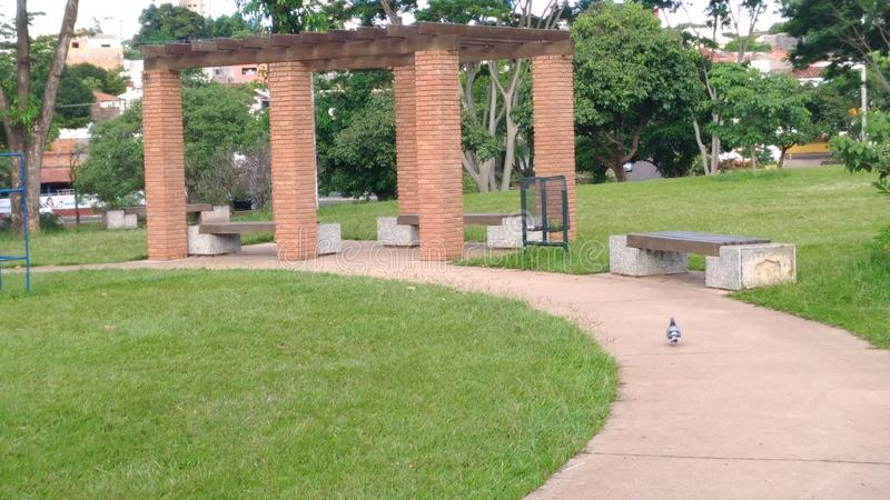 En duva i parkera royaltyfria foton