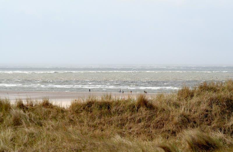 en dyn är en kulle av lös sand som byggs av eoliska processar och, kallas den Ammophila arenariaen, europeiska marramgras, europe royaltyfri bild