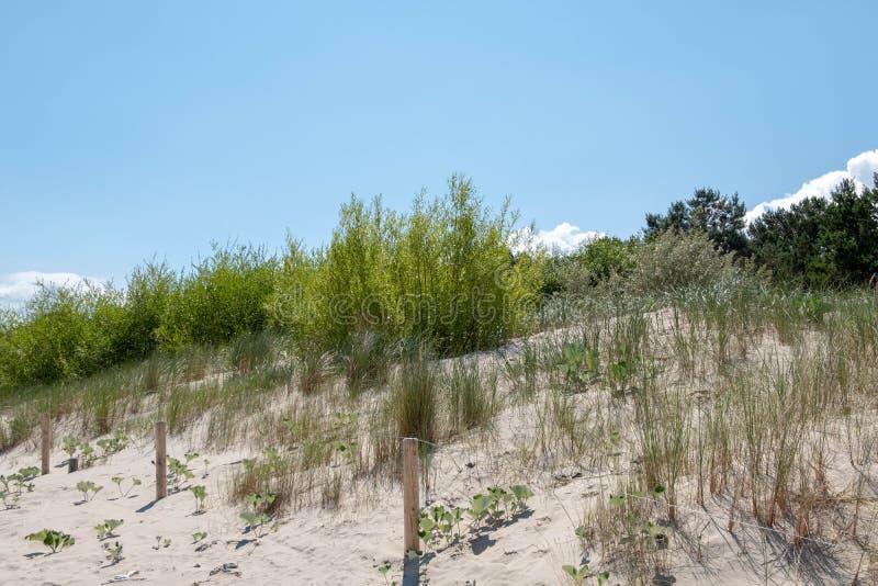 En dyn på stranden av Zempin royaltyfri bild