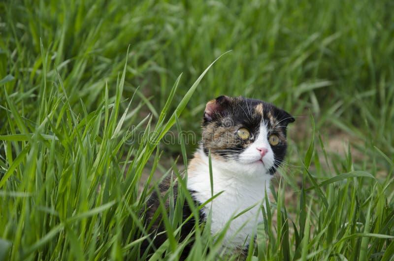 En eftertänksam katt går i ett fält arkivbilder