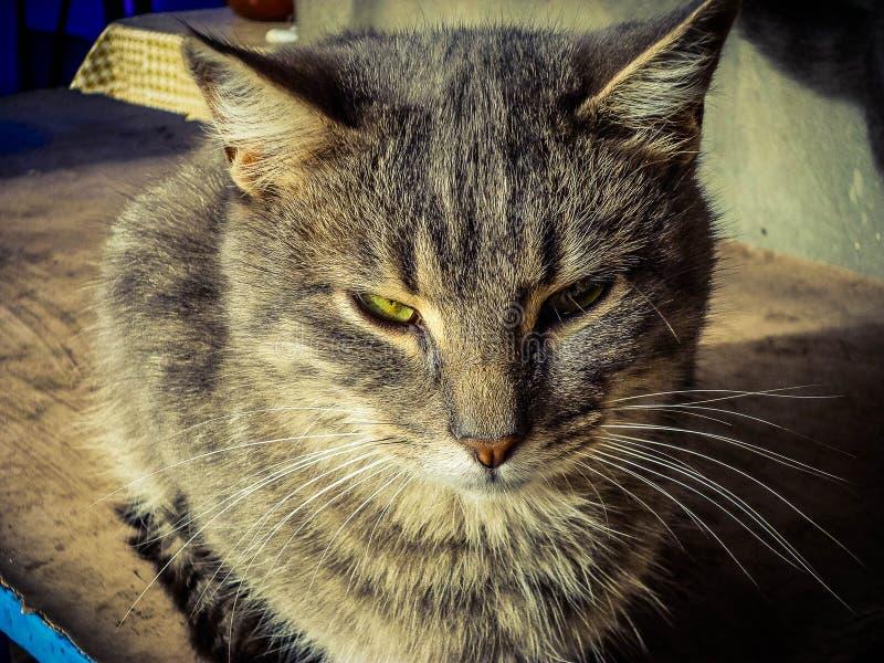 En eftertänksam slug katt med gula ögon royaltyfri foto