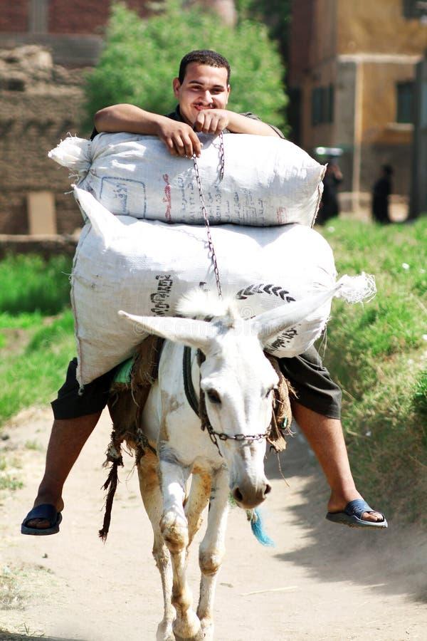 En egyptisk bonde som rider en åsna på lantgården i Egypten royaltyfri foto