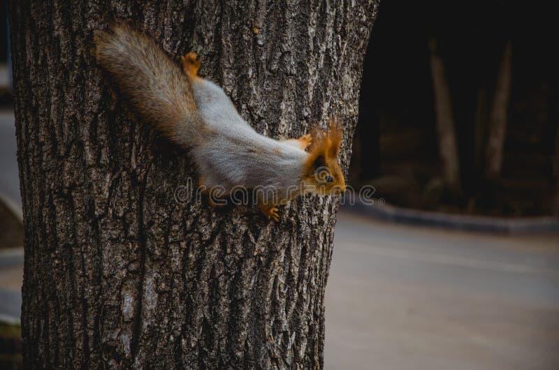 En ekorre sitter på ett träd i skogen i vår royaltyfri fotografi