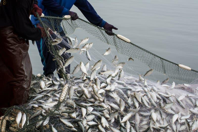 En el barco del pescador, cogiendo muchos pescados fotografía de archivo libre de regalías